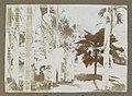 Gezelschap staand tussen palmbomen in Suriname In den Palmentuin (titel op object) Op Soeki-baka (titel op object), RP-F-F01203-V.jpg