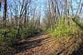Gfp-iowa-bellevue-state-park-forest-hiking-trail.jpg