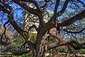 Gfp-texas-san-antonio-tree-in-alamo-garden.jpg