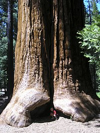 Riesenmammutbaum-national-monument-jason-hickey.jpg