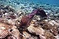 Gigantische Muräne im Roten Meer..DSCF3644ВЕ.jpg