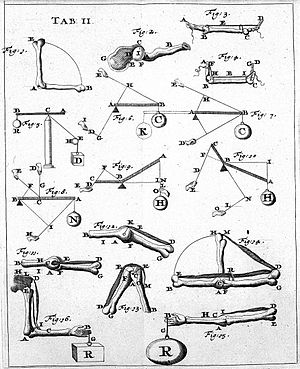 Biomechanics - Page of one of the first works of Biomechanics (De Motu Animalium of Giovanni Alfonso Borelli) in the 17th century