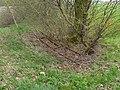 Gleisrest der Torfbahn Vinte.jpg