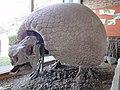 Gliptodon munizi at Museo Lorenzo Scaglia, Mar del Plata 01.jpg