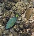Glover's Reef 2-14 (32989700821).jpg