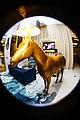 Golden horse sculpture - HRC Punta Cana.jpg