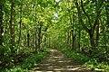 Grönskande Lenstad naturreservat, Öland.jpg