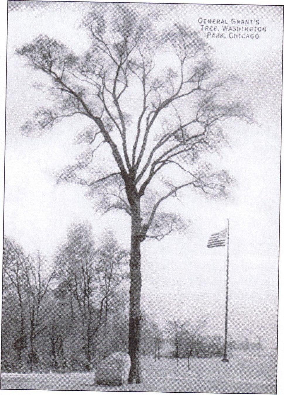 Grant Tree1