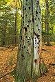 Gravel Family Nature Preserve (10) (30290474501).jpg