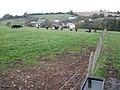 Grazing land, above Kentisbeare - geograph.org.uk - 1022518.jpg