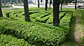 Green Plants that the municipality has shaped - panoramio.jpg