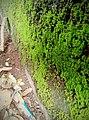 Green moss on wall.jpg