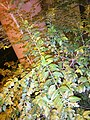 HKU campus 香港大學 Bonham Road 般咸道 night 校院 green leaves n lighting August 2017 Lnv2 01.jpg