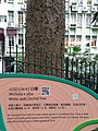 HK 中環 Central 香港動植物公園 Zoological and Botanical Gardens flora green leaves April 2020 SS2 04.jpg