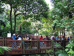 Hong Kong Park - Inside the aviary