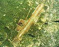 Hachijojima Airport Aerial photograph.1978.jpg