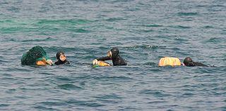 Haenyeo Female occupational divers in the Korean province of Jeju