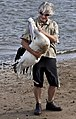 Hammy with Captured Pelican Shorncliffe-2 (6510209733).jpg