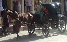 الحنطور، وهي عربة ذات طراز قديم يجرها