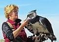 Harpia harpyja -falconry-8a.jpg