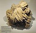 Harvard Museum of Natural History. Gypsum Desert Rose. Dhahran, Eastern Region, Saudi Arabia (DerHexer) 2012-07-20.jpg