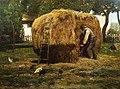 Hassam - the-barnyard.jpg