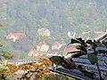 Heidelberg, Blick von der Molkenkur über den Neckar auf Neuenheimer Villen am Fuße des Heiligenberges .JPG