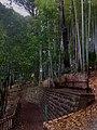 Higashikurume City Takebayashi Park - Jan 24 2021 various 15 15 34 428000.jpeg