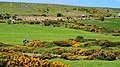 Hill country near Castlerock - geograph.org.uk - 1911532.jpg