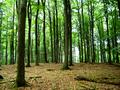 Hinrichshagener Wald 05-07-2010 08.png