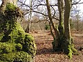 Hodgemoor Wood (2313631878).jpg