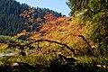 Hoh fall moss trees cbubar (17116539369).jpg