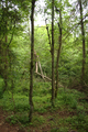 Hoher Vogelsberg Wannersbruch NR 319289 Coarse woody debris Snag.png