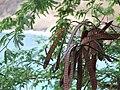 Honolulu bay seadpods.jpg