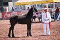 HorseTexcoco14.JPG