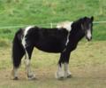 Horses, Cadole 1-2.png