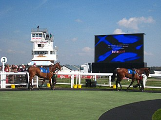 Exeter Racecourse - Horses in the paddock at Exeter Racecourse