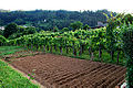 Horta e viño de Betanzos.jpg