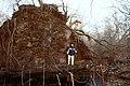 Huge Tree in Tottenville Staten Island - panoramio.jpg