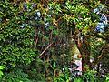 Hutan Kecil di Pulau Sambu - panoramio.jpg
