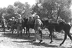 IDF soldiers of the mule transport unit during army autumn maneuvers (D367-050).jpg