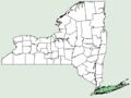 Ilex glabra NY-dist-map.png