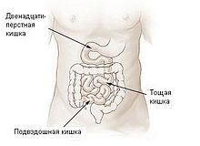 Illu small intestine-Russian.JPG