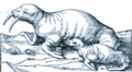 Illustration du Walrus, beste marine.png