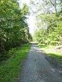 Im Wald am Tiergarten bei Wolbeck - geo.hlipp.de - 15713.jpg