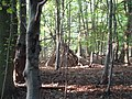 In Mousells Wood - geograph.org.uk - 1077744.jpg