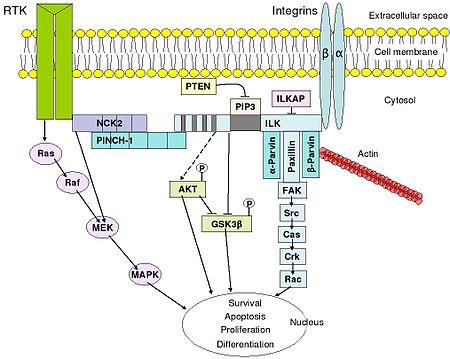 signal transduction pathway  Signal transduction
