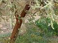 Interesting Tree (2) (5174895459).jpg