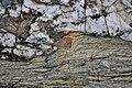 Iron Pyrites - geograph.org.uk - 2358729.jpg