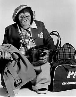 J. Fred Muggs chimpanzee mascot of NBCs Today Show from 1953 to 1957